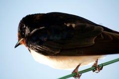 Small bird on wire Stock Photo