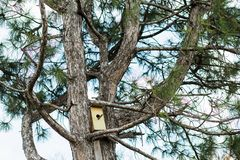 Small birdhouse in the spring on a coniferous tree royalty free stock images