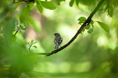 Small birdie on a branch surrounded with foliage. Spring mood Royalty Free Stock Photos