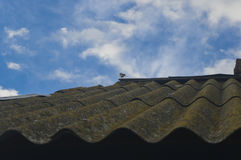 Small birdie on a shabby roof against the sky Royalty Free Stock Images