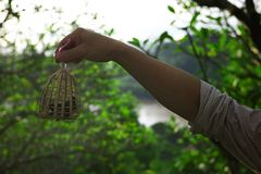 small birds are freed up as a part of a traditional offerings for good luck stock photography