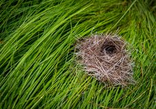 Small Birds Nest on Wet Grass Royalty Free Stock Images