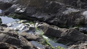 Small birds splashing water at rocky beach. stock footage