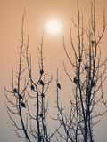 Small birds Royalty Free Stock Image