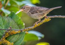 The small birds of the summer!. The small birds of the summer with their different colors and diverse songs brighten the nature and give us happiness in the royalty free stock image