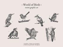 Small birds vector drawings set Royalty Free Stock Photo