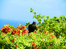 Small black bird perched on vegetation Royalty Free Stock Images