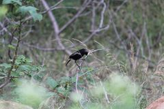 Small Black bird on the stem, colored Birds stock image