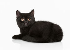 Small black british kitten Royalty Free Stock Photography
