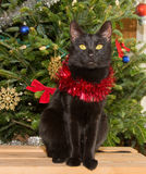 Small black cat in front of a Christmas tree Royalty Free Stock Photography