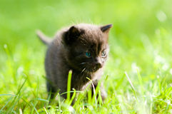 Small black cat looking forward Stock Photos