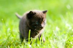 Small black cat looking forward stock photos
