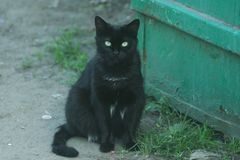 Small black cat. A small black cat sits on the May ground near the metallic green wall in the May evening stock photos