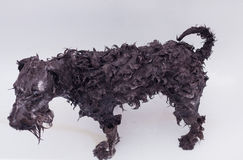 Small black dog having a bath Stock Photography