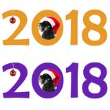 Small black dog Miniature Schnauzer in Santa`s hat looks out t Stock Images