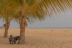 Small black dog next to palm tree. Royalty Free Stock Image