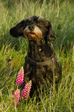 Small black dog sat down in wild grass Royalty Free Stock Photography