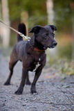 Small black doggie. Stock Image