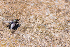 Small black fly outdoor Stock Photography