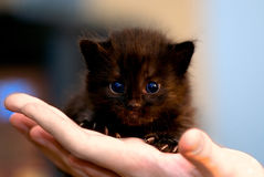 Small black kitten stock photo