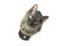 The small black kitten Royalty Free Stock Photo