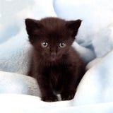 Small black kitten lying on a blanket Royalty Free Stock Photos
