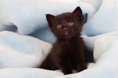 Small black kitten lying on a blanket Stock Photos