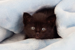 Small black kitten lying on a blanket Royalty Free Stock Image