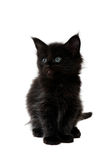 Small black kitten Royalty Free Stock Image