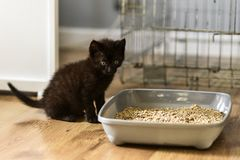 A small black kitty learning to get to the gravel in a cat litte. R box stock images