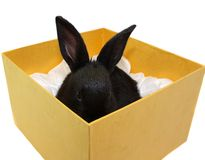 Small, black rabbit in a gift box. Stock Photography