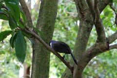 Small black and white bird Royalty Free Stock Photo