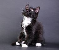 Small black and white cat looking up Royalty Free Stock Photography