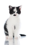 Small black and white kitten Royalty Free Stock Photos
