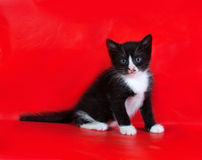 Small black and white kitten sitting on red Stock Photo