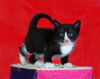 Small black and white kitten standing on red Stock Photos