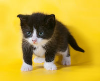 Small black and white kitten standing on yellow Royalty Free Stock Images
