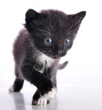 Small black and white kitten Royalty Free Stock Photography
