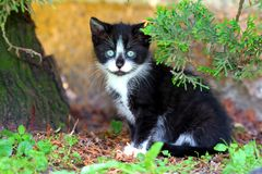 Small black and white kitty Royalty Free Stock Images