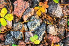 Small black, white and red pebble background with autumn yellow autumn leaves. Top view of stone gravel texture. green. Small black, white and red pebble stock photography