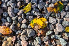 Small black, white and red pebble background with autumn yellow autumn leaves. Top view of stone gravel texture. green. Small black, white and red pebble stock image
