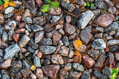 Small black, white and red pebble background with autumn yellow autumn leaves. Top view of stone gravel texture. green. Small black, white and red pebble stock images