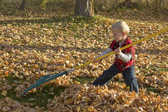 Small Blonde Boy Raking Leaves Royalty Free Stock Images