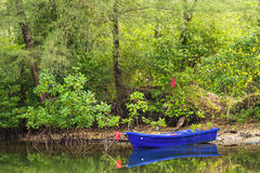 The small blue boat parked in a small canal at the mangrove fore Royalty Free Stock Photography