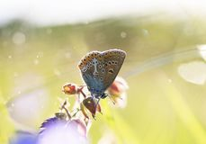 A small blue butterfly sits on a flower amid the bright grass in stock image