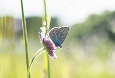 small blue butterfly sits on a flower amid the bright grass in royalty free stock photos