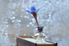 Small blue flower Stock Photos