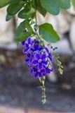 Small blue flowers Stock Photos