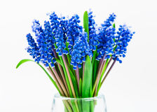 Small blue flowers Muscari in vase isolated. Royalty Free Stock Photography