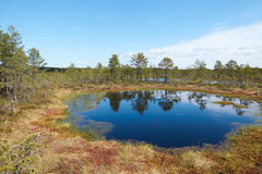 Small blue lake in the middle of the Viru Raba bog in Estonia Stock Images